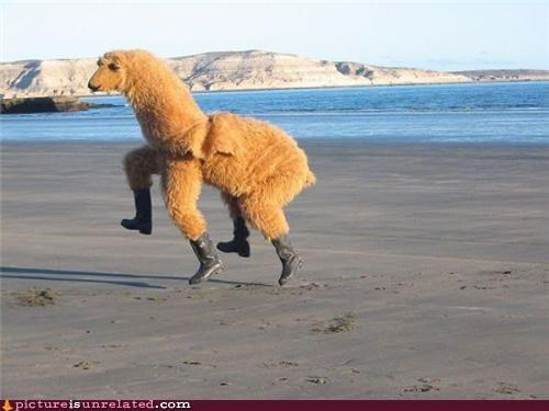 beach boots camel costume wtf