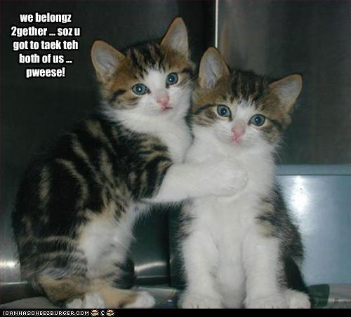 adoption brother caption cute kitten - 3780576768