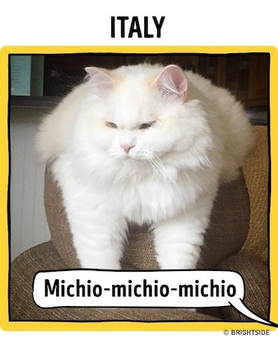 a funny list of how to call your cat in different languages