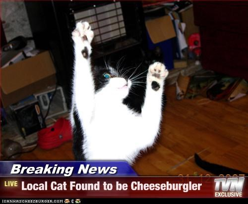 Cheezburger Image 3781325824