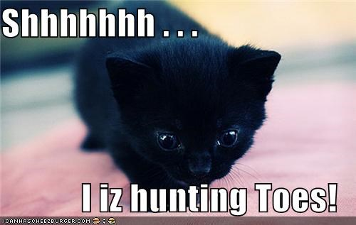 cute hunting kitten oh noes - 3781511936