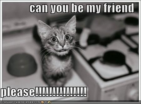 Can You Be My Friend Please Cheezburger Funny