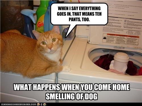 WHEN I SAY EVERYTHING GOES IN, THAT MEANS TEH PANTS, TOO. WHAT HAPPENS WHEN YOU COME HOME SMELLING OF DOG