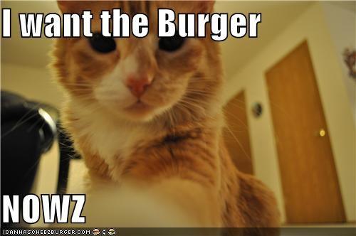 Cheezburger Image 3782658304
