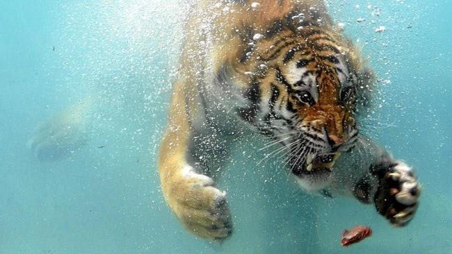 wild animals in action