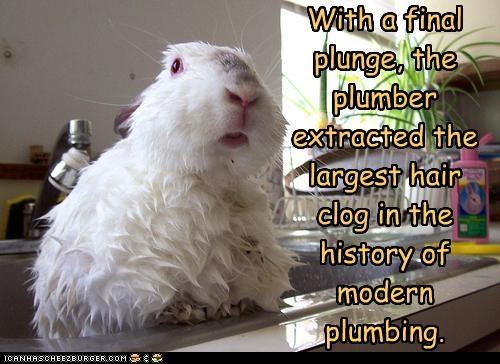 bath caption clog lolbuns sink wet - 3783151360