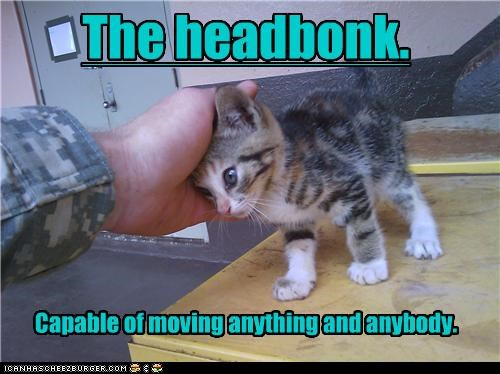 anybody anything bonk capabilities capable caption captioned cat head kitten limitless moving potential powerful touching
