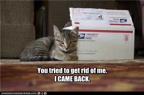 box caption cute kitten threats - 3783257088