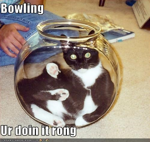 bowl bowling cyoot kitteh of teh day - 3783258368