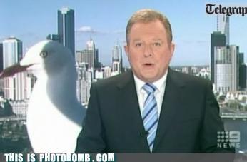 animals fake monster attack godzilla Impending Doom lol monster photobomb seagulls - 3783460096