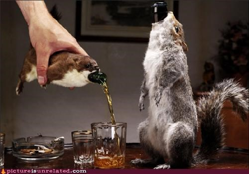 booze bottles decanter squirrel taxidermy wtf