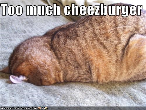 Cheezburger Image 3785260288