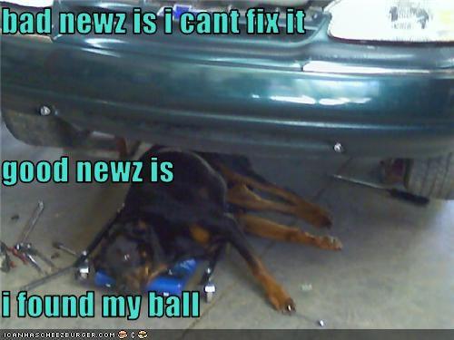 Cheezburger Image 3785564672