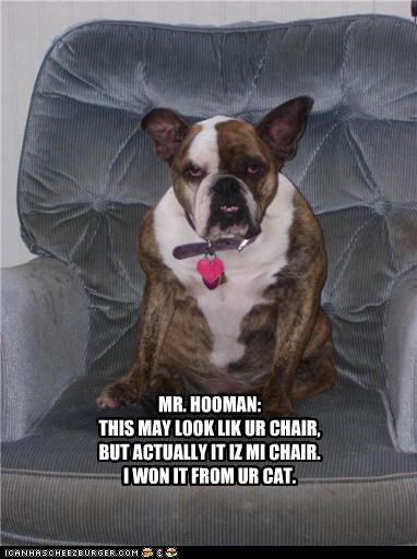 MR. HOOMAN: THIS MAY LOOK LIK UR CHAIR, BUT ACTUALLY IT IZ MI CHAIR. I WON IT FROM UR CAT.