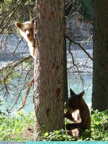 bear,cub,tree