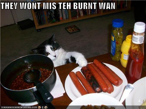 caption fud hot dog nom nom nom plotting stealing want - 3787333632