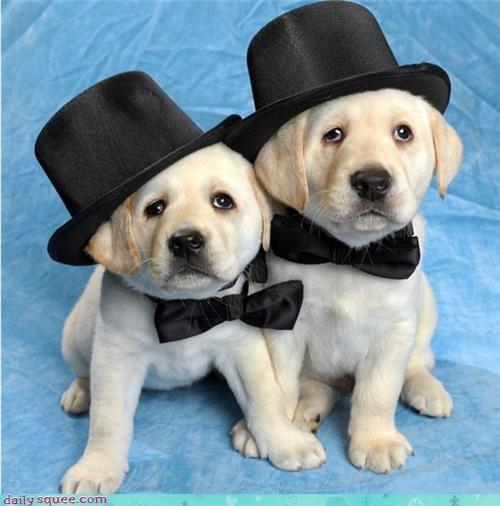 costume puppy - 3787430656