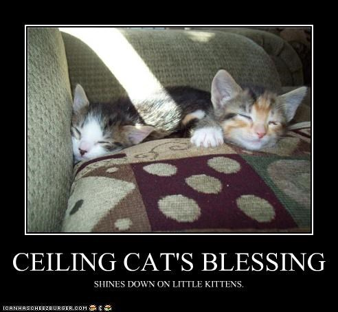 caption ceiling cat cute kitten nap sunbath - 3788510720