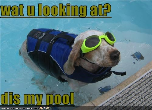 goggles,life vest,pool,swimming,whatbreed