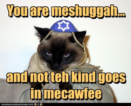 caption captioned cat coffee Hall of Fame hannukah hannukat insult meshuggah pun siamese sugar yarmulke - 3789164032