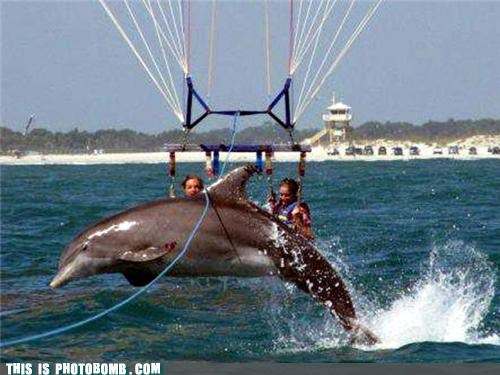 Animal Bomb,animals,dolphin,invasion,parasailing,photobomb,water,Zeus and Roxanne