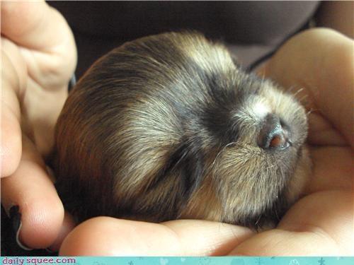 Day of Rest puppy sleep - 3790298624