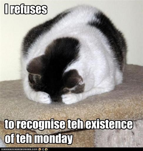 best of the week,caption,captioned,cat,do not want,existence,monday,recognize,refusal,refuse,refusing