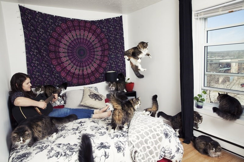 photo series of crazy cat lovers