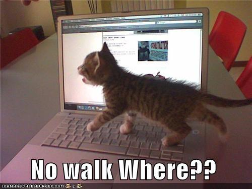 bad cat caption cute kitten laptop oh noes - 3791782656