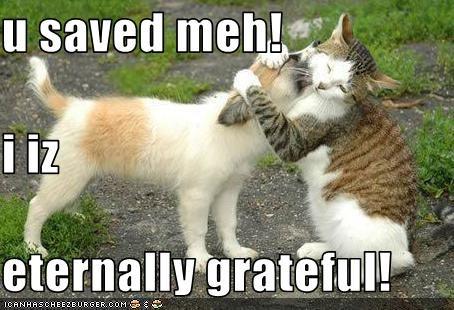 U Saved Meh I Iz Eternally Grateful Cheezburger Funny Memes Funny Pictures