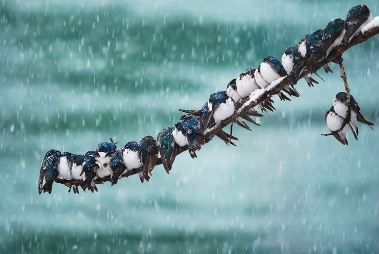 photos of birds trying to warm up together