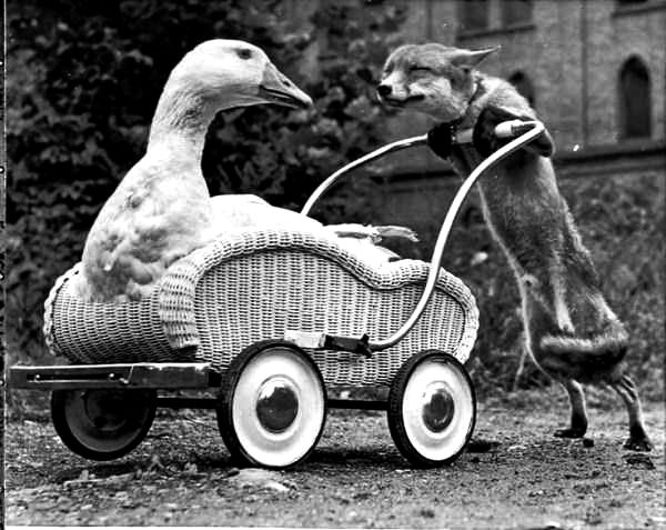 vintage animAL PHOTOS that are weird