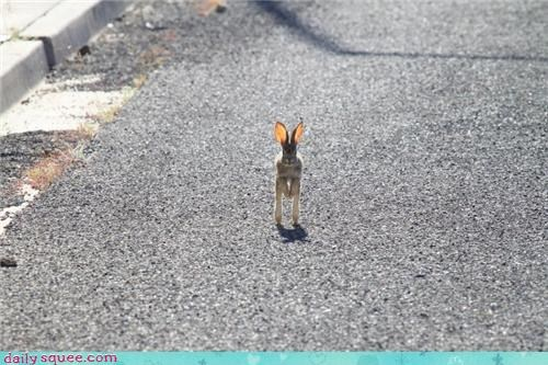 bunny,ears,hare