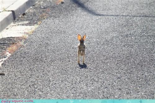 bunny ears hare - 3792310784
