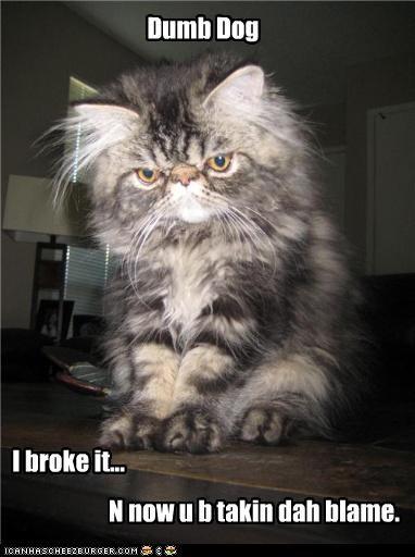 Dumb Dog I broke it... N now u b takin dah blame.