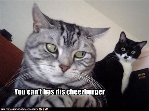 Cheezburger Image 3792339968