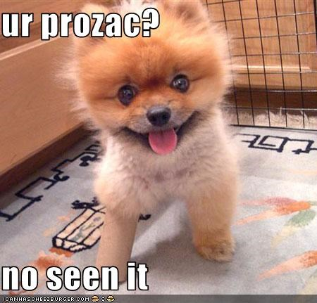 crazy,cute,learning,liar,peg leg,pomeranian,prozac