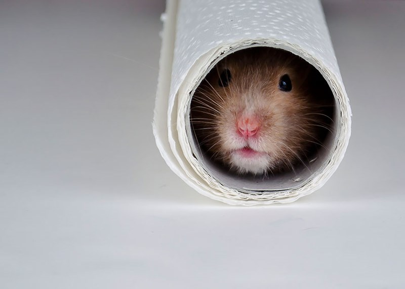 a funny list of adorable hamsters