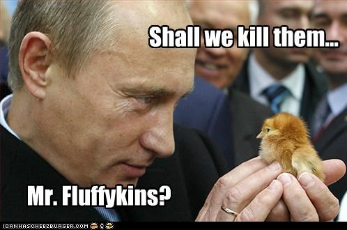 animals foreign funny Vladimir Putin - 3793403136