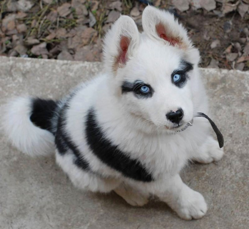a funny list of crazy fur markings