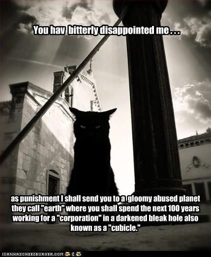 basement cat,caption,oh noes,punishment,work