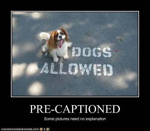 dogs allowed Hall of Fame happy mixed breed no dogs allowed - 3794708992