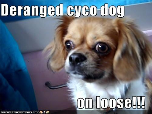 Deranged cyco dog  on loose!!!