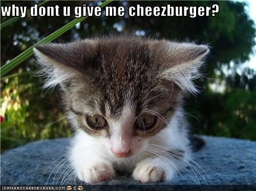 why dont u give me cheezburger?