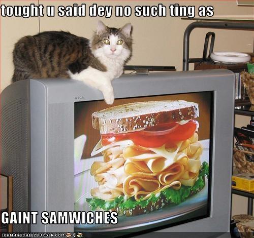Cheezburger Image 3795118080