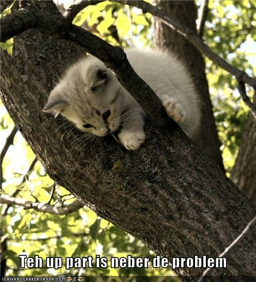 caption,cute,fire department,kitten,stuck,tree