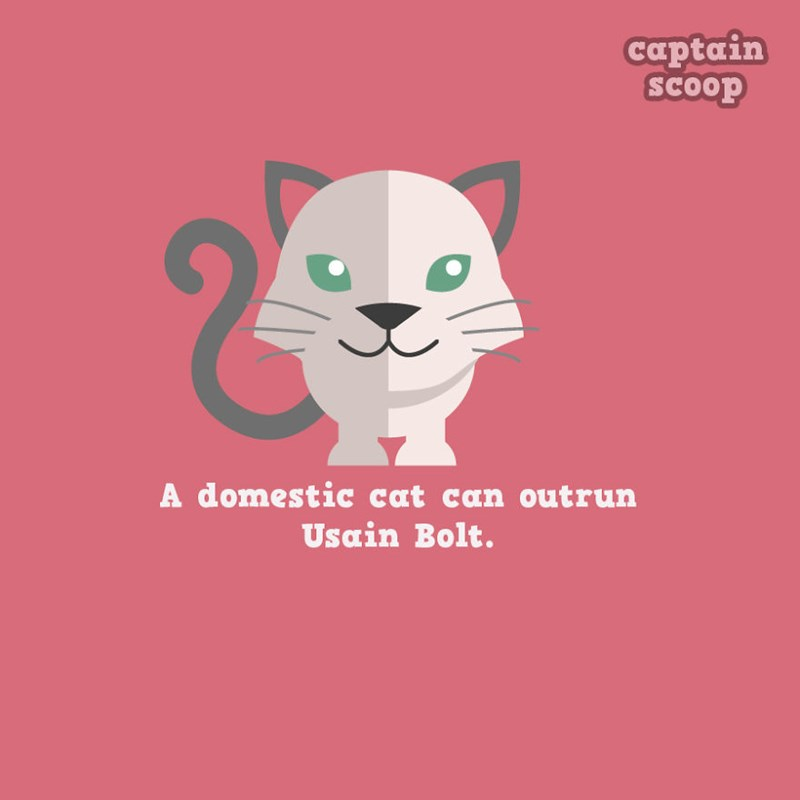 adorable list of animals and fun facts