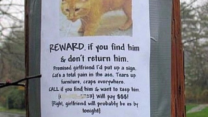 a funny list of missing cat posters