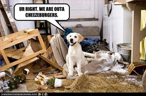 Cheezburger Image 3796344576