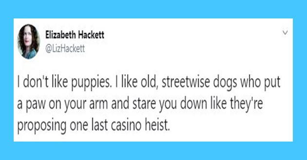 a funny list of dog tweets from 2017